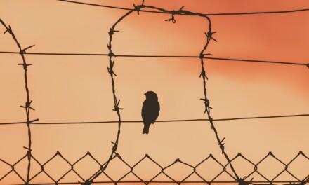 Türkische Gefängnisse in Zeiten von Corona